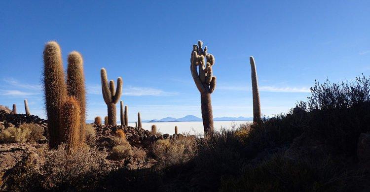 L'île Incawasi, l'île aux cactus