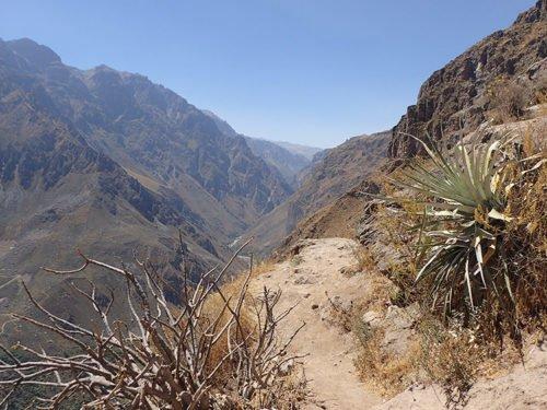 Vue du Canyon de Colca
