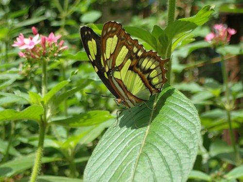 Papillon au parc des oiseaux