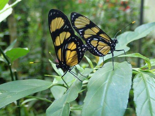 Deux papillons au parque das Aves