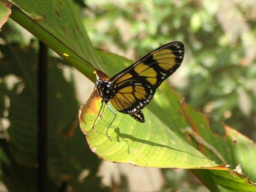 La serre aux papillons à Foz do Iguaçu