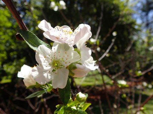 Fleur du jardin botanique de Buenos Aires