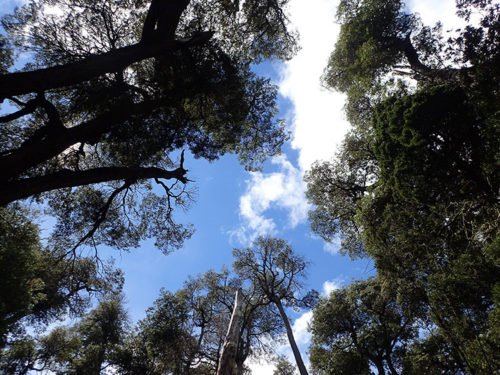Arbres dans le parc Llao Llao