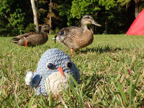 Pablo et les canards