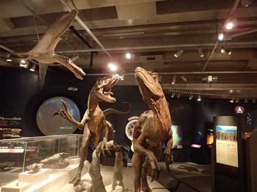 Les vélociraptors du musée Te Papa
