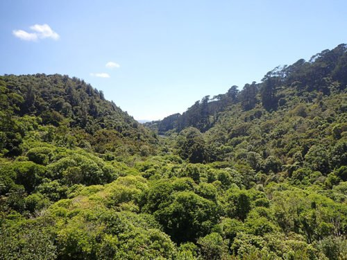 Zealandia à Wellington