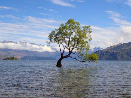 Le Lone Tree de Wanaka