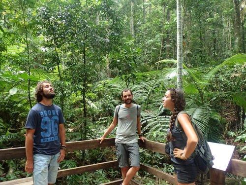 Les Manalas et Cédric dans la Daintree Forest