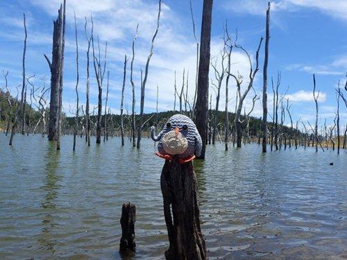 Pablo au lac Tinaroo