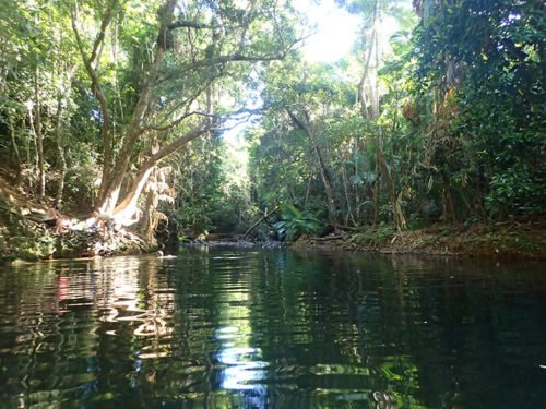 swimming hole dans la Daintree Forest