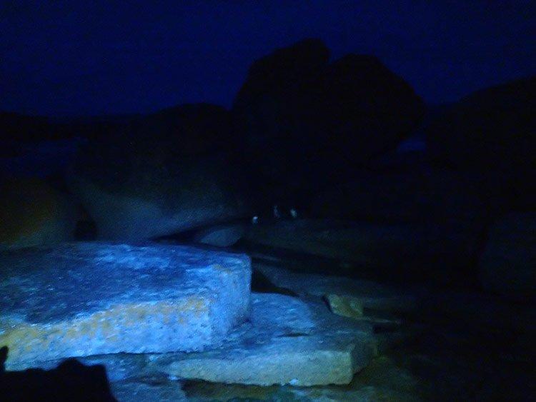 3 manchots au Blowhole de Bicheno