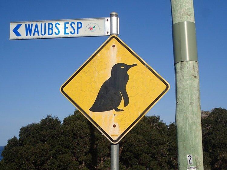 Panneau manchot en Tasmanie