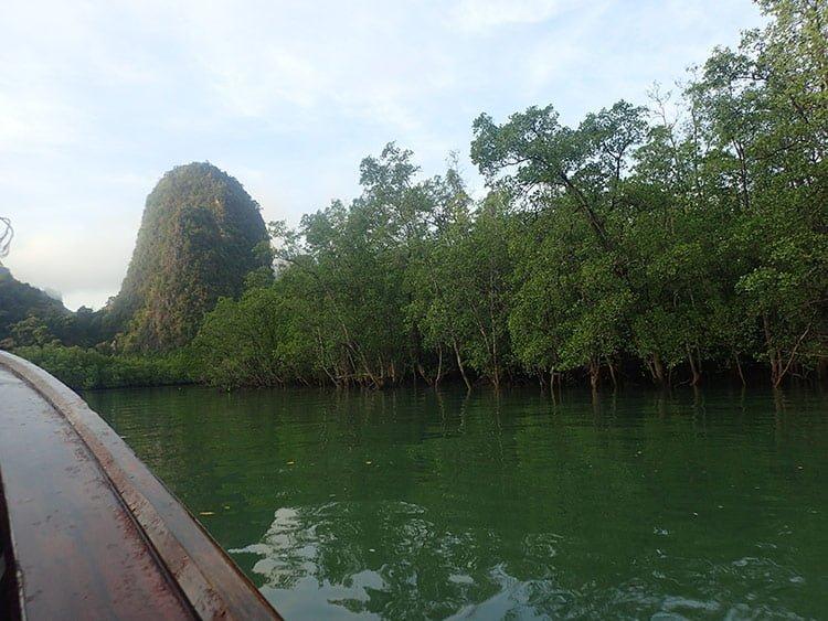 La mangrove de la baie de Phang Nga