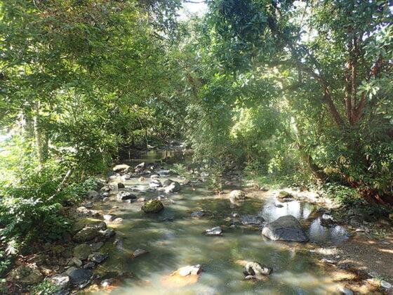 Petite rivière riche en poissons et libellules