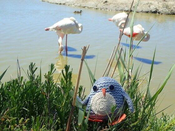 Pablo en mode camouflage au parc ornithologique du Pont de Gau